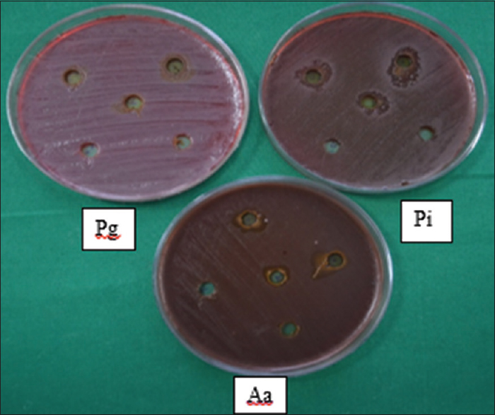 Figure 2: The inhibition zone is the area surrounded the hole, and there is no growth of inoculated microorganism (<i>Porphyromonas gingivalis</i>, <i>Aggregatibacter actinomycetemcomitans</i>, and <i>Prevotella intermedia</i>)